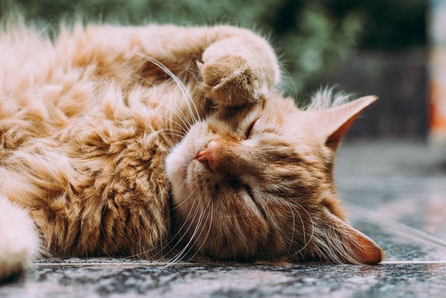 Een kattenluik gebruiken